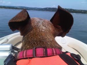 2 ears up